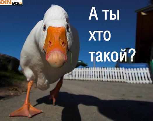 А ты хто такой?