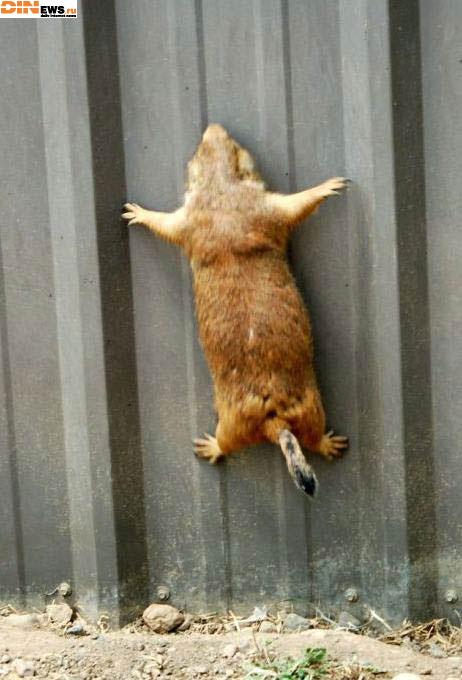 Он решил убить сибя ап стену!