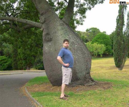 Пивной живот - пивное дерево!