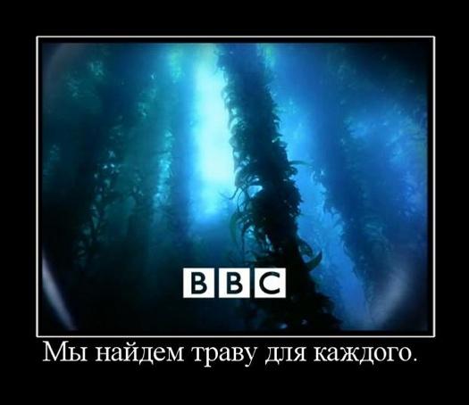 BBC – мы найдем траву для каждого