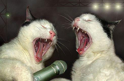Кошачье караоке...