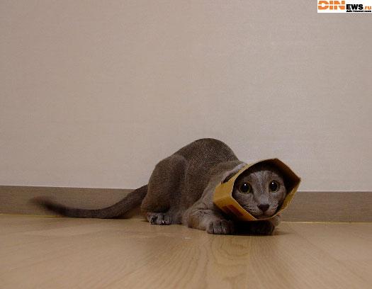 Новая порода кошек: Перфокарта или Картонка дырявая