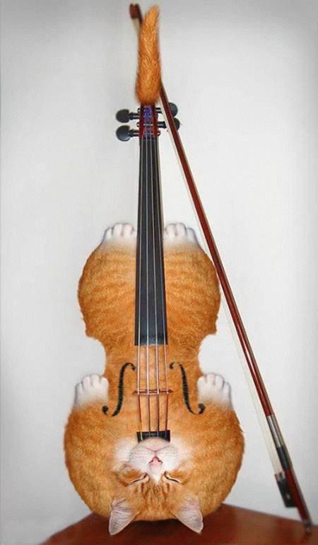 Кошачье скрипко...