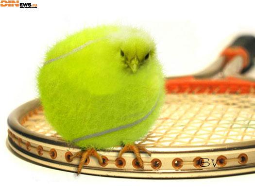 Теннис большой - это хорошо...