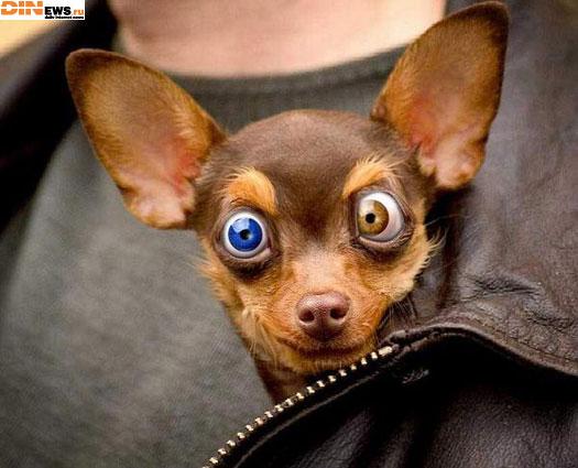 Кто так накурил собаку?