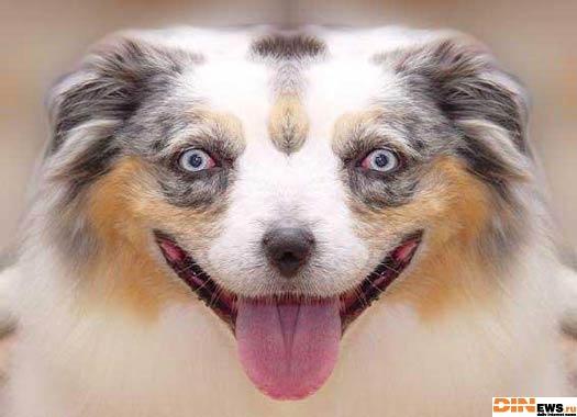Признавайтесь!!! Кто так накурил собаку?!