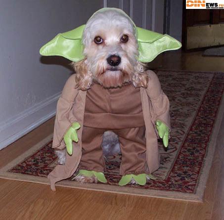 Кого-то это собака мне напоминает... :)