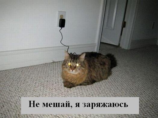Электрокот
