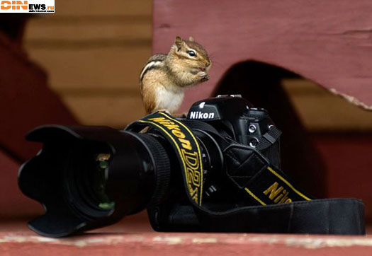 Фотолюбитель!