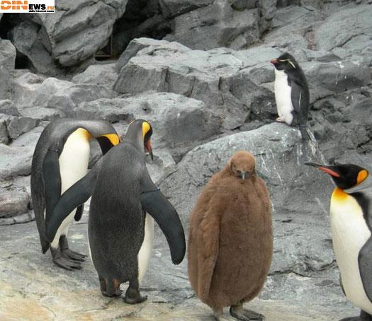 Гадкий пингвиненок! :)