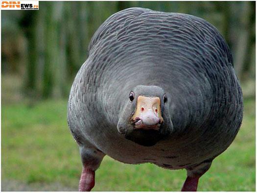Вот он какой птичий грипп... :)