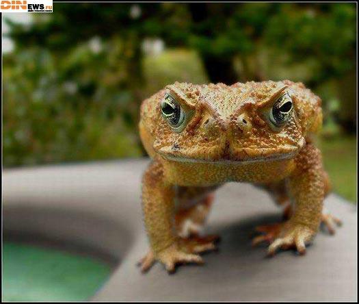 Crazy Frog то как похорошел... :))