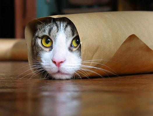 А вам слабо закатать кота в рулон?