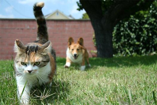 Котику — кранты!