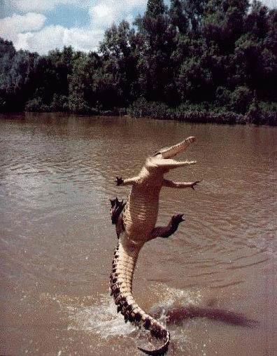 Летающий крокодильчег!
