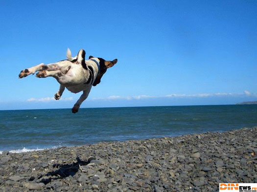 Летающий собак!