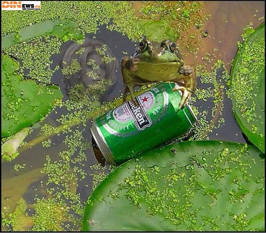 Деликатес: Царевна-Лягушка с пивом!