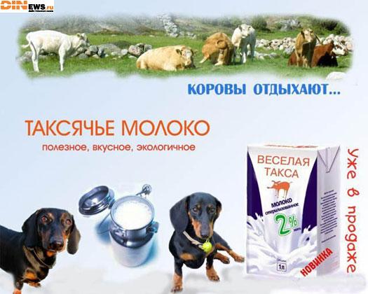 Таксячье молоко! Коровы отдыхают!