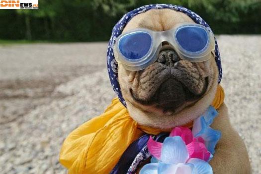 Все на пляж! Я готов! :)