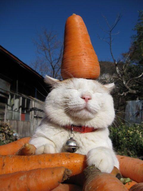 Кошак морковоядный