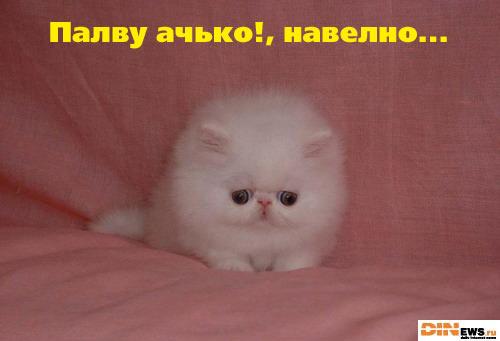 Зверь-котяра! Жесть! :)