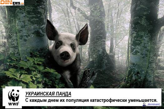 Украинская панда...