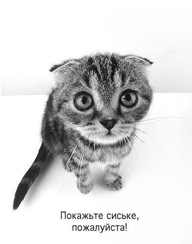 Покажите сиське, пожалуйста!