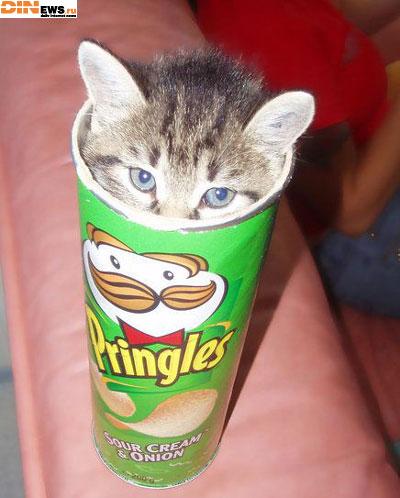 Pringles cо вкусом котенка...