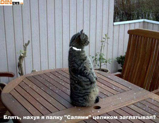 Салями vs Кот