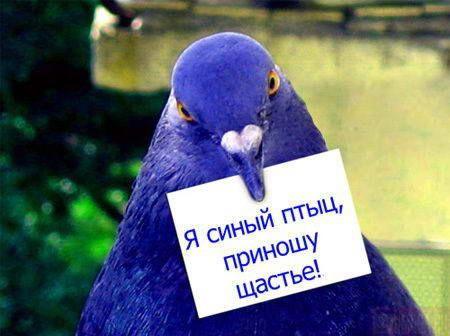 Я синый птиц, приношу щастье!