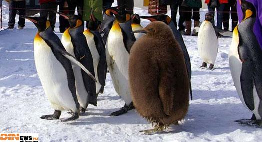 Снова Линуксы... :)