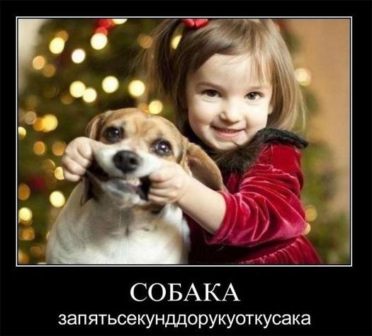 Собака запятьсекунддорукуоткусака