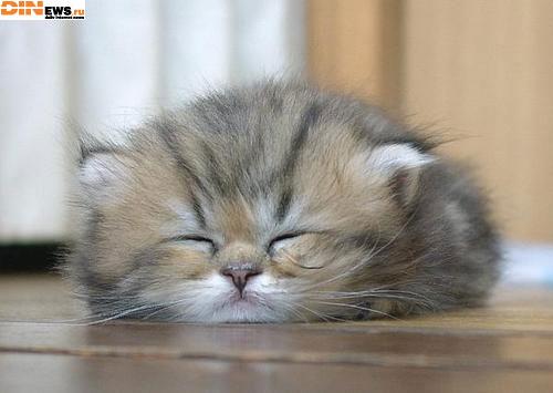 Я еще сплю...