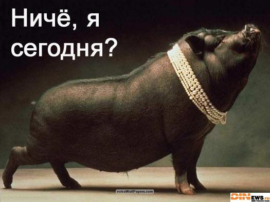 Свинтус Поросятович Кабанейро...