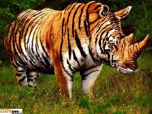 Тигра! :)