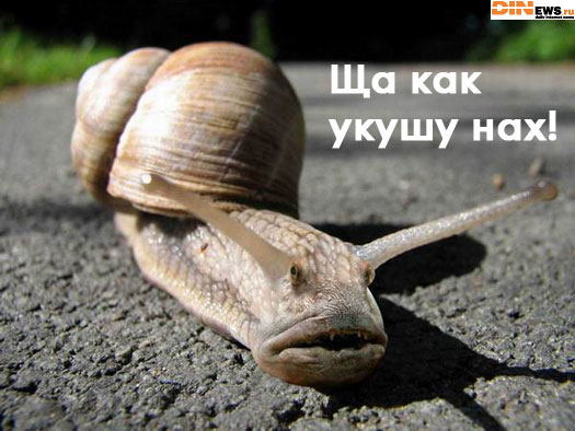 Улиточка... Гы! :)